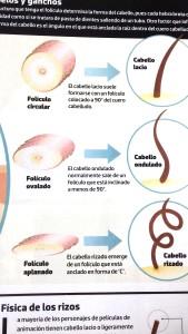 foliculos