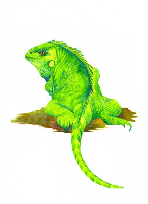 iguana-copy